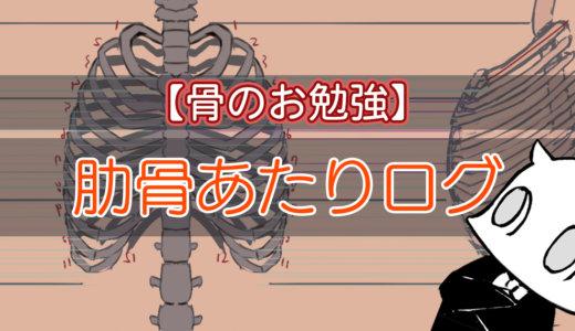 【骨の勉強ログ】肋骨部分